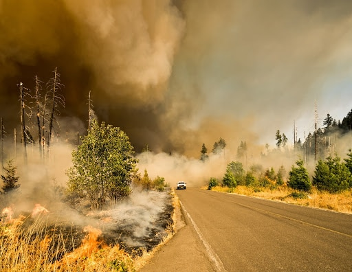 wildfire next to road