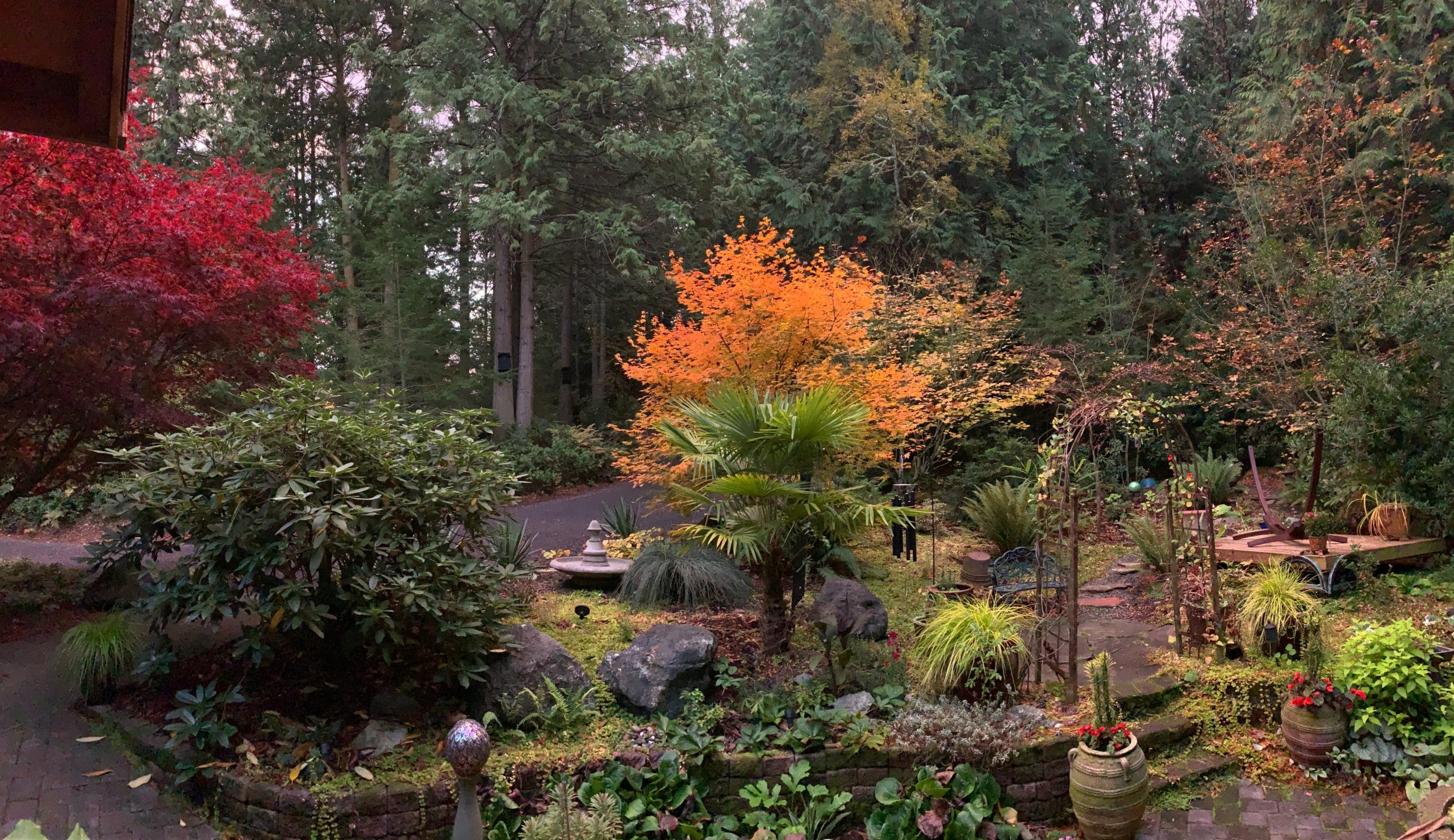 garden in fall